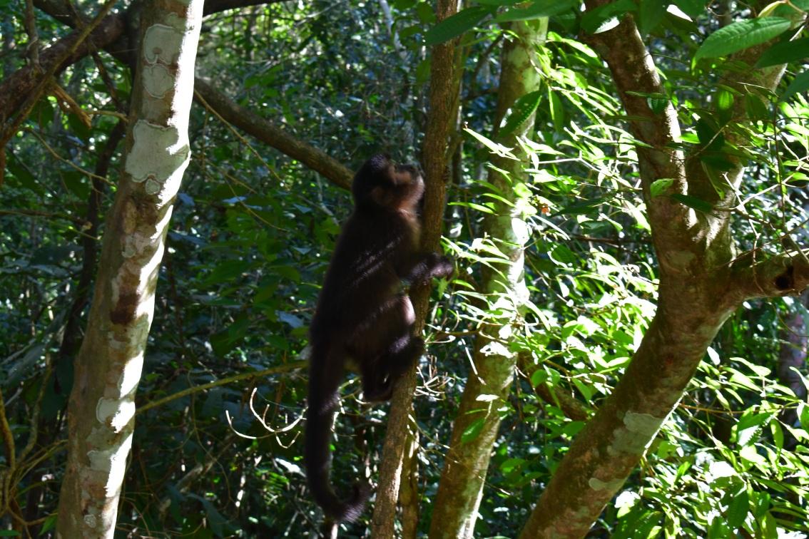 Meeting Monkeys andCoati