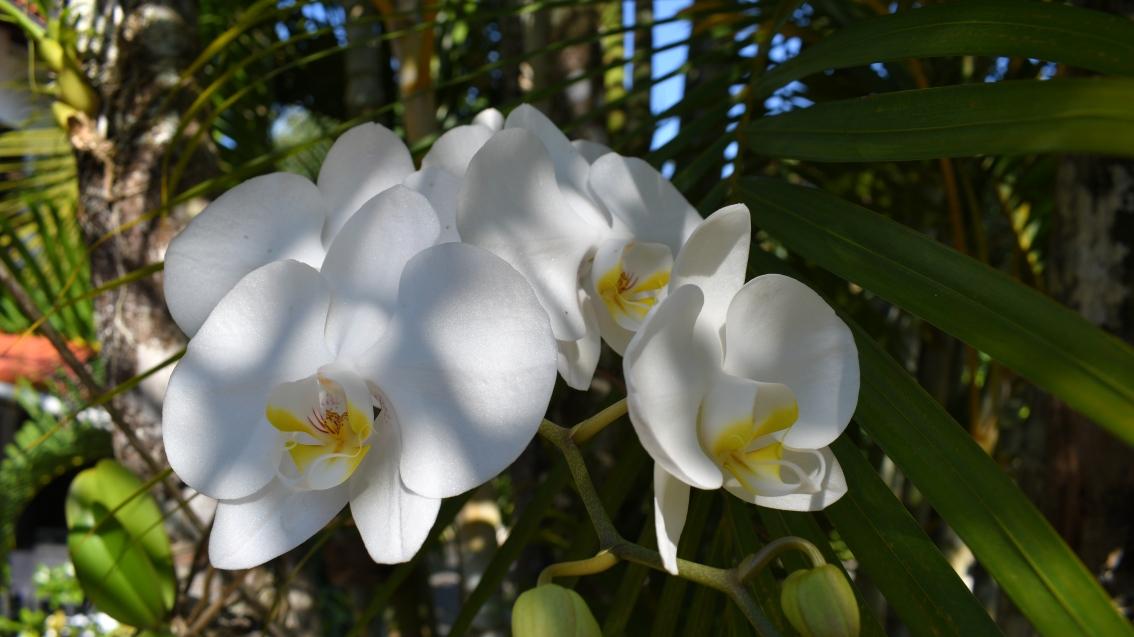 Flora of Brazil