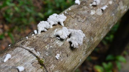 Mushrooms growing on way to waterfalls