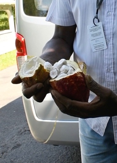 Pods inside the fruit